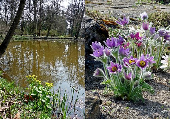 Ha szívesen magadba szívnál valamennyit egy arborétum tavaszi varázsából, de a fővároshoz kissé közelebb fekvő helyet keresel, vedd célba a Vácrátóti Botanikus Kertet!