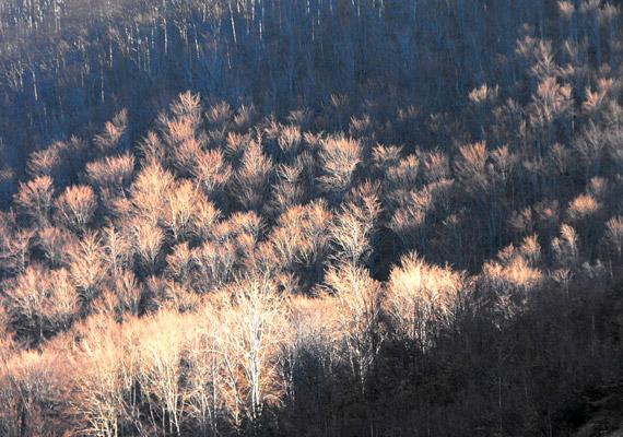 Téli erdő teteje valahol a Mátrában. Az ágak mintha fagyott kristályok lennének.