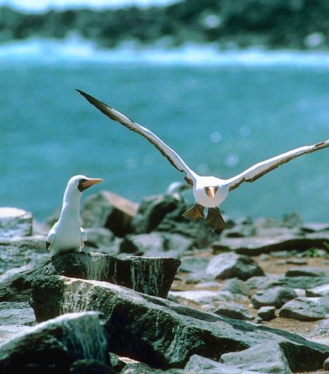 Galapagos, EcuadorA Csendes-óceán keleti részének félreeső vizein található szigetcsoport különleges vadvilágáról híres, melynek láttán Darwin először fogalmazta meg magának a természetes kiválasztódáson alapuló törzsfejlődés elméletét. A vad és kopár tájak számos olyan élőlénynek adnak otthont, mely sehol máshol a világon nem fordul elő - ilyen a híres galapagosi leguán is.