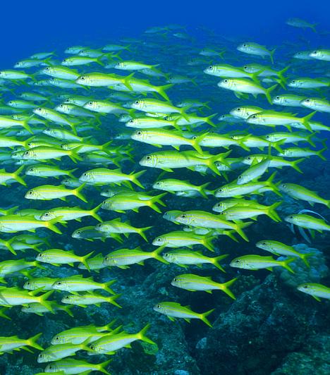 Új-Kaledónia, Csendes-óceán  A francia fennhatóságú szigetcsoport az őt 1600 kilométer hosszan körülölelő korallzátonynak köszönhetően a világ egyik legnagyobb lagúnáját alkotja. Új-Kaledónia a hal- és korallfajok gazdagsága terén egyedülálló a világon: mintegy 6500 különféle tengeri életformának ad otthont.