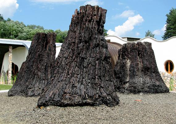 Szintén a vulkanikus aktivitásnak köszönhetőek azok a látnivalók, amelyek ma is megcsodálhatóak az Ipolytarnóci Ősmaradványok Természetvédelmi Területen, ugyanis utóbbi olyan különlegességeket mutat be, amelyeket egykor egy vulkánkitörés temetett el. A képen egykori mocsárciprusok láthatók. Még több furcsa csodáért kattints ide!