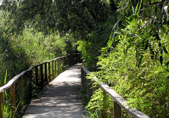 A főépület mellett szabadidőpark kapott helyet, népszerű látnivaló a Tájház, illetve a halászskanzen, a létesítmény kikötőjéből pedig GPS navigációs csónakokkal vízi túrák, illetve kishajós kirándulások indulnak a tóra. Innen indul rendszeres járat az 1500 méteres Tisza-tavi vízi sétányhoz is. A képen ennek részlete látható.