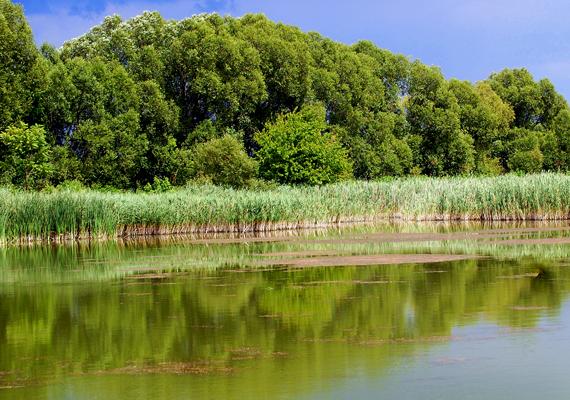 A Madarász-tó ideális hely egy hétvégi kiránduláshoz. A nagy felbontású képért kattints ide!