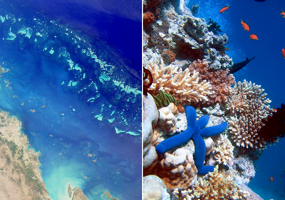 A Nagy-korallzátony érzékeny ökoszisztémája 12 éven belül eltűnhet a klímaváltozás és a szennyezés miatt.
