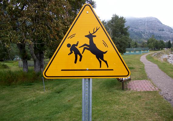 Szarvassal ütközni nem célszerű, az Alberta és Montana határán található Waterton Lakes Nemzeti Parkban különösen nem.