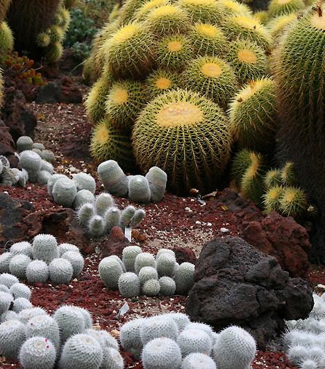 Huntington Library Sivatagi Kert, USAA kaliforniai San Marinóban található Huntington Library nevű intézmény művészi kollekciói mellett számos különféle botanikus kertnek is otthont ad. Ezek egyike a különleges kaktuszkert, mely nemcsak azt mutatja meg, hogy milyen sokszínűek a kaktuszok, de azt is, hogy a sivatagi klíma is képes csodás természeti alkotásokat létrehozni.