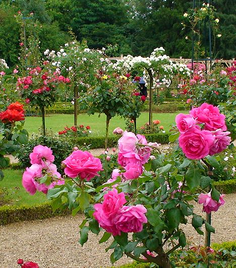 La Bagatelle, Párizs, FranciaországAz angol stílusú párizsi kert egy 1770-es években épült apró, de annál szebb neoklasszicista kastély körül helyezkedik el a Boulogne-i erdőben. A kastélyt állítólag két hónap alatt építtette fel Artois grófnője egy Marie Antoinette-tel kötött fogadás miatt. A park szívét jelentő illatos rózsakertet 1905-ben hozták létre.