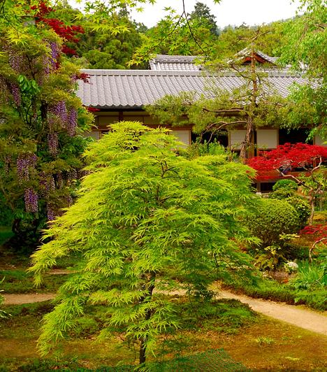 Ryoanji, JapánRyoanji egy Zen templom Kiotóban, kertje pedig a jellegzetes japán sziklakertek egyik legismertebb remeke. A kertben minden a meditációról szól, a sziklák és kövek elhelyezkedésének éppúgy spirituális jelentése van, mint a parkban található installációknak vagy épp a természet közelségének.