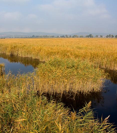 Fertő kultúrtáj                         Magyarország és Ausztria közös felterjesztése alapján a Fertő-tó és az azt övező települések 2001-ben kerültek fel a Világörökségi Listára. Az indoklásban a természeti értékek mellett - a Fertő-tó Európa nemzetközi jelentőségű vadvize és a kontinens legnagyobb sósvizű tava - a környék kulturális öröksége is szerepelt.                         Kapcsolódó cikk:                         Az ország legtitokzatosabb tava »