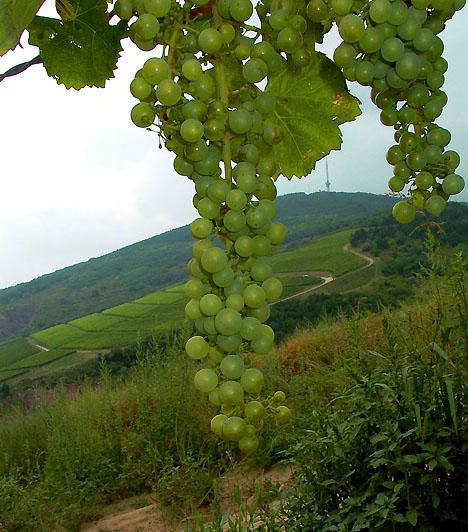 A tokaji borvidék                         A tokaji borvidék az elmúlt ezer év alatt kialakult szőlőművelési hagyományok érintetlen formában való továbbélésének köszönhetően érdemelte ki 2002-ben a Világörökségi rangot. A helyszín 132 négyzetkilométernyi szőlőtermő területet és 27 további települést foglal magában.