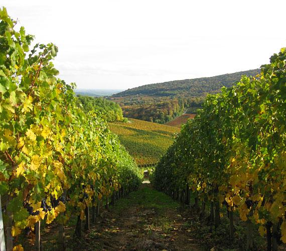 Jobb időben akár piknikezni is lehet a szőlőben, biztos van, aki fuvaroz a faluból a dűlőkre, mert sétálva elég meredek lenne.