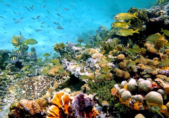 Nem utolsósorban pedig ide tartozik az Elisabeth és a Middleton-zátony is. Zealandia egész területén rendkívül változatos élővilág található a víz alatt, emellett temérdek ásványi kincs. Új-Zéland vezetése azonban utóbbiak kitermelését szigorúan kontrollálja.