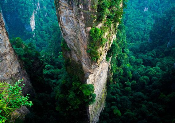 A sziklaóriások parkjában több mint ötszáz fa található. A Long Xia nevű virág pedig igazi különlegességnek számít, ugyanis naponta öt alkalommal képes megváltoztatni a színét.