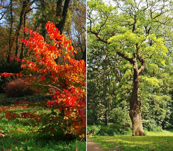 Az arborétum látványa magáért beszél: az ország egyik legcsodálatosabb botanikus kertje. Egyik fő látványossága a körülbelül 400 éves kocsányos tölgy.