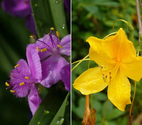 A botanikus kert számos csodaszép virággal is büszkélkedhet.
