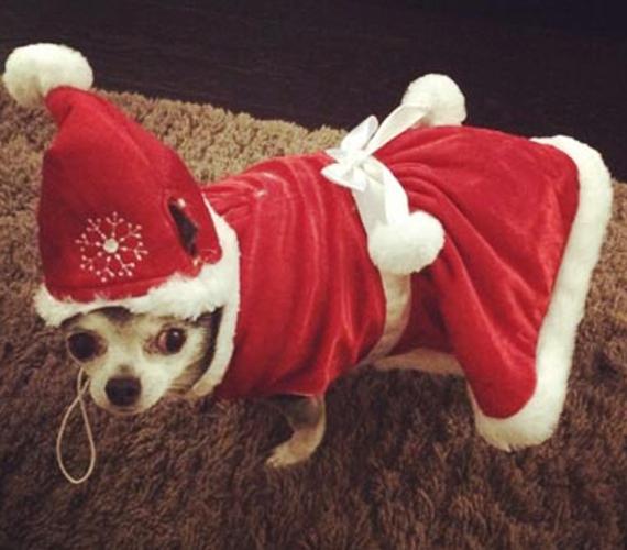 Cheryl Cole a kutyáját, Cocót is bevonta az ünneplésbe.