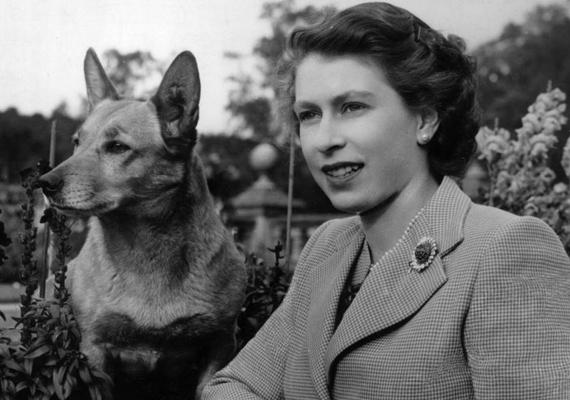 A királynő és első szerelme. Azóta 30 másik kutyája volt, jelenleg négy corgi és öt spániel gazdája, azonban kedvencét senki sem tudja pótolni.