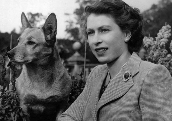 Első corgi kutyáját, akit Susan névre keresztelt, 18. születésnapjára kapta az édesapjától. Azóta kedvenc ebének leszármazottai szaladgálnak a királyi udvaron. A Sandringham-kastély kertjében kutyatemető van, ahová a kis ölebeket örök nyugalomra helyezik. Erzsébet a macskákat ki nem állhatja.