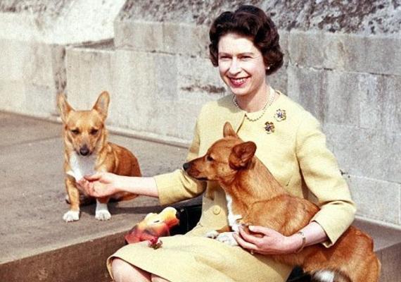 Erzsébet királynő és a híres corgie-jai. Az uralkodó annyira imádta ezeket a fajtájú kutyákat, hogy az évek során több mint 30-nak viselte gondját. Elizabeth Bowes-Lyon, az anyakirálynő is élt-halt értük, még bronz mellszobrot is állítottak neki kedvenc corgie-jaival.