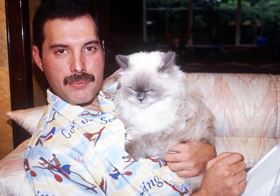 Freddie annyira imádta a macskáit, hogy egyiküknek, a képen látható szőrgombócnak még egy dalt is írt. A Delilah című szám kis kedvencéről szól, akit annyira szeretett, hogy amikor turnéra ment, telefonon beszélt hozzá - egyik barátnője segítségével.