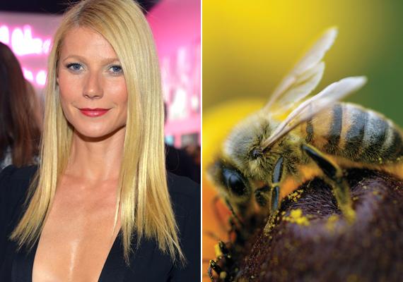 Bármilyen gyönyörű is a 43 éves Gwyneth Paltrow bőre, nem szívesen próbálnánk ki a méhterápiát. A folyamat során ráadásul a méhek is elhullanak, így csoda, hogy az állatvédők nem tiltakoznak még az amúgy is kihalófélben lévő rovarok öncélú kipusztítása ellen.