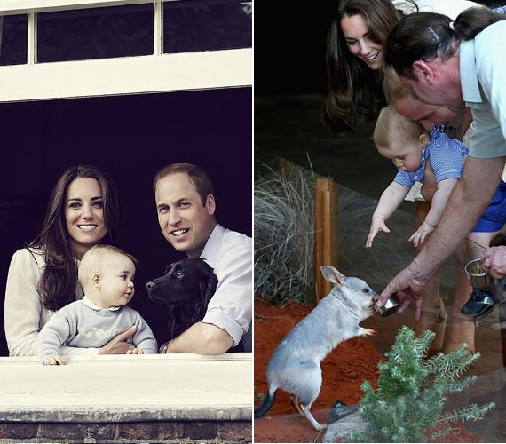 György herceg igazi állatbarát, legyen szó akár Vilmos herceg és Katalin hercegnő cocker spánieljéről, Lupóról, akár a sydney-i állatkert kis lakóiról, a hercegfiúcska nem retten meg a négylábúaktól.