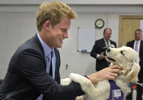 Harry nemcsak egy ragadózóval, hanem egy cuki négylábú kutyussal is barátságot kötött, aki mentőkutyaként szolgál egy brit intézetnél. A herceg egy kisebb adománnyal támogatta a szervezet munkáját.