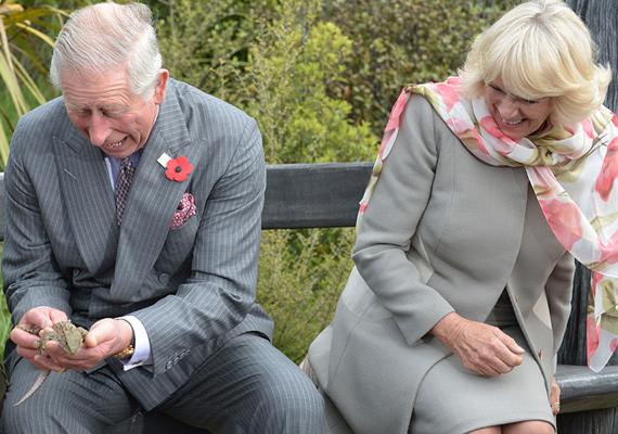 Egy állatmenhelyre is ellátogattak, ami egzotikus állatoknak nyújt menedéket. Károly herceg egy gyíkot is megsimogatott, Camilla pedig jókat nevetett rémült arckifejezésén.