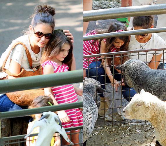 Igyekszik minél több időt kislányával tölteni: július 11-én a Central Parkban található állatkertbe vitte Surit, ahol együtt megetették a birkákat.