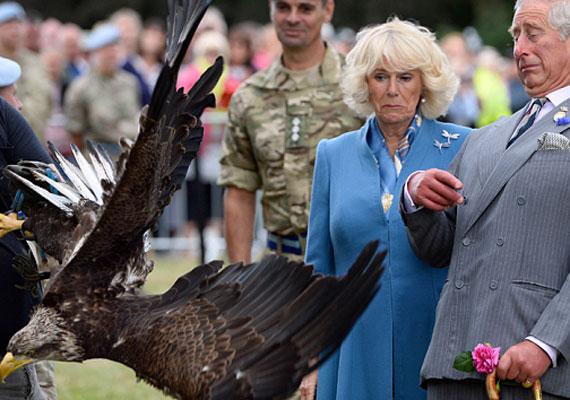 Camilla és Károly herceg egy madárbemutatóra volt hivatalos, ahol ezt a frappáns fotót sikerült róluk elkészíteni. Az a kérdés, ki ijedt meg jobban, ők a madártól, vagy a madár tőlük.