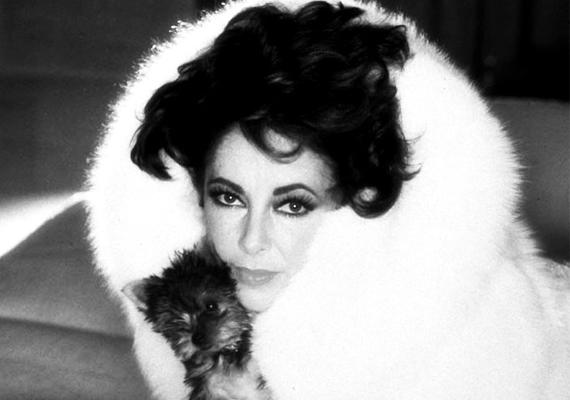 Elizabeth Taylor szintén nagyon kedvelte a bundákat, de nem volt kedvenc árnyalata, szívesen húzott magára feketét, fehéret és leopárdmintásat is.