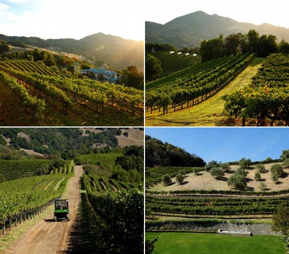 A Villa Sorrisóhoz hatszáz holdas Cabernet Sauvignon-szőlészet és -pincészet is tartozik, pazar kilátással a Napa- és a Sonoma-völgyre. Az áramellátás egy részét napkollektorok biztosítják.