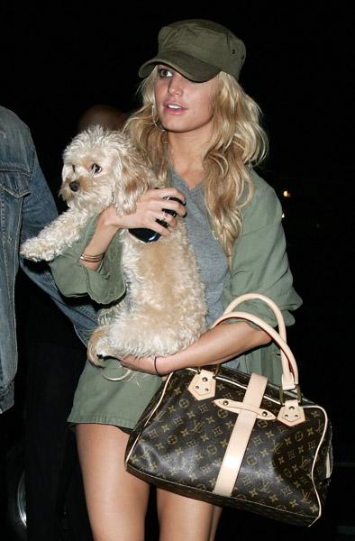 Jessica Simpson kutyája