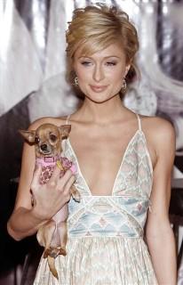 Paris Hilton csivavája