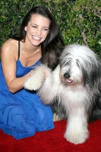 Kristin Davis egyik kutyája