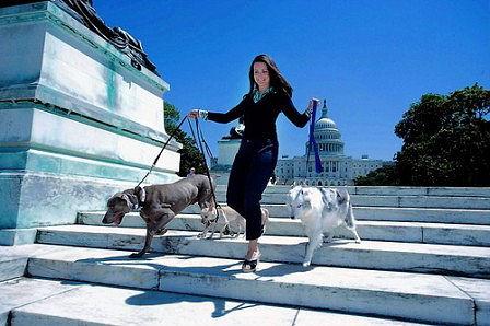 Kristin Davis kutyái