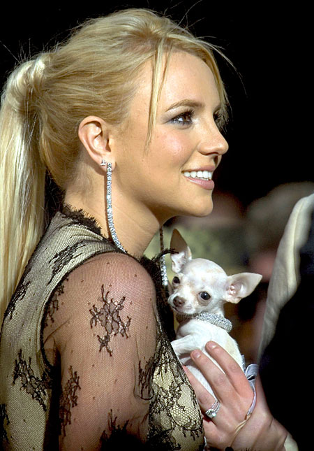 Britney Spears csivavája