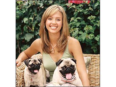 Jessica Alba Bulldogjai