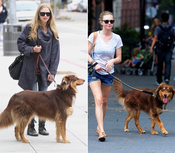 Amanda Seyfried kutyáját, Finnt sétáltatja.