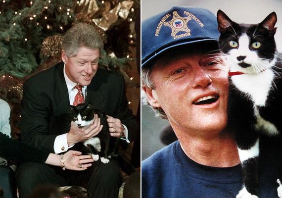A történelem egyik leghíresebb macskájává vált Socks, azaz Zokni, aki Bill Clinton volt amerikai elnök házikedvence volt.