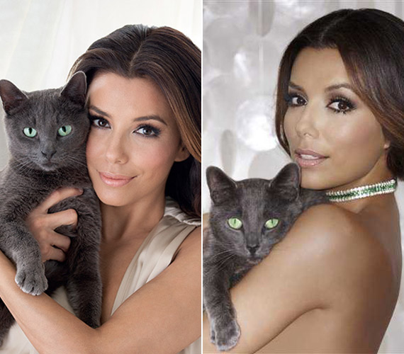 Eva Longoria is szereti az állatokat, az alábbi fotók egy macskaeledel-reklámfilm forgatásán készültek.