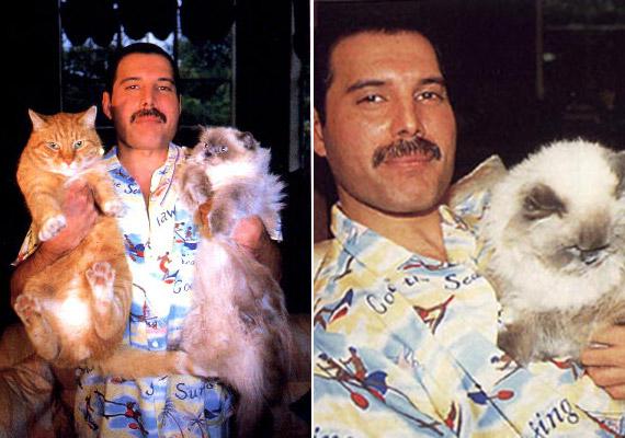 Freddie Mercury imádta a macskákat, tartott is belőlük néhányat.