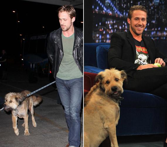 Ryan Gosling szeretett kutyájával, George-dzsal. A színész barátnője, Eva Mendes is állatbarát hírében áll, így a párnak nem jelenthet gondot a kutya sétáltatása sem.