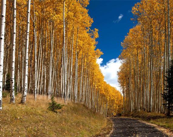 A házhoz vezető fasor körülbelül másfél kilométer hosszú.