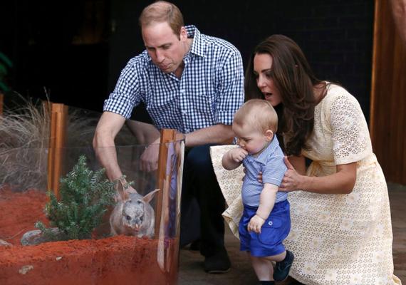 Az egyik állatkertben Vilmos attól tartott, hogy egy erszényes állatnak komoly baja esik a fia miatt:                         - Ha a közelébe engedik, akkor soha nem fogja elengedni.